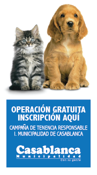 veterinario web